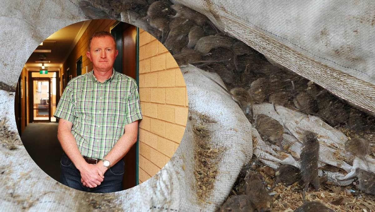 2021 mouse plague through NSW promotes problems for mental ...